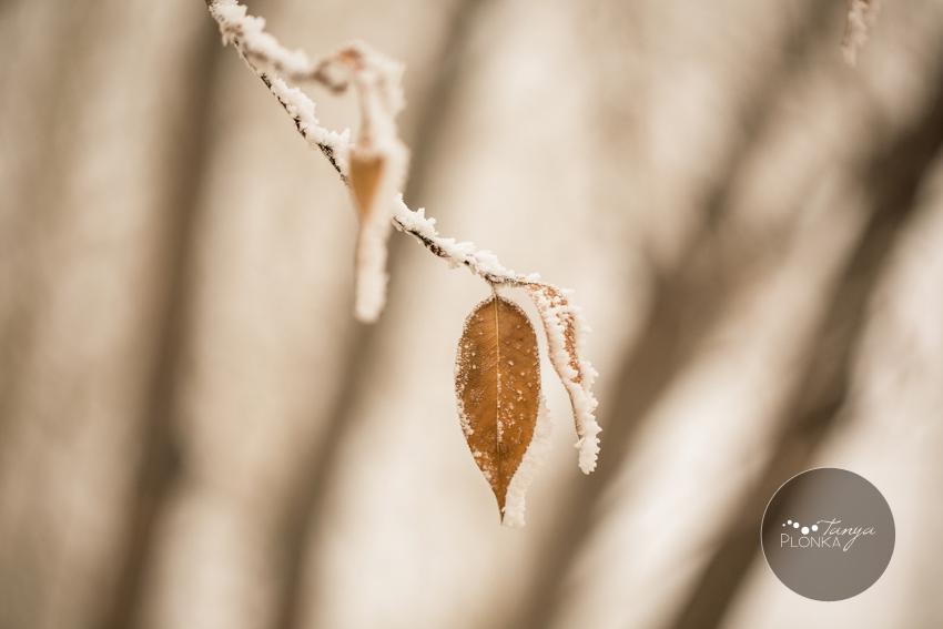 Lethbridge landscape photo leaf with frost