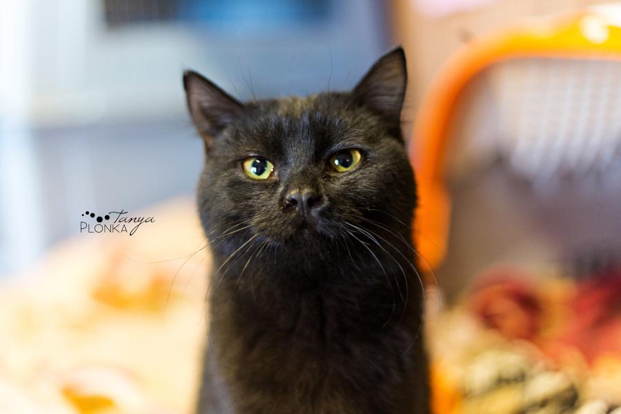 Lethbridge Cat Rescue