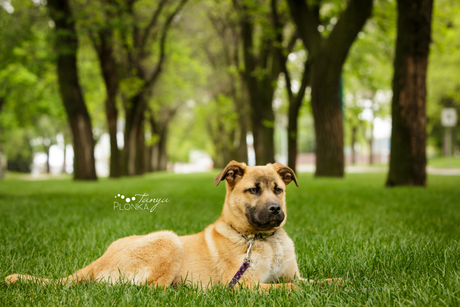 Dog available for adoption in Lethbridge, Alberta through Alberta Animal Rescue Crew Society