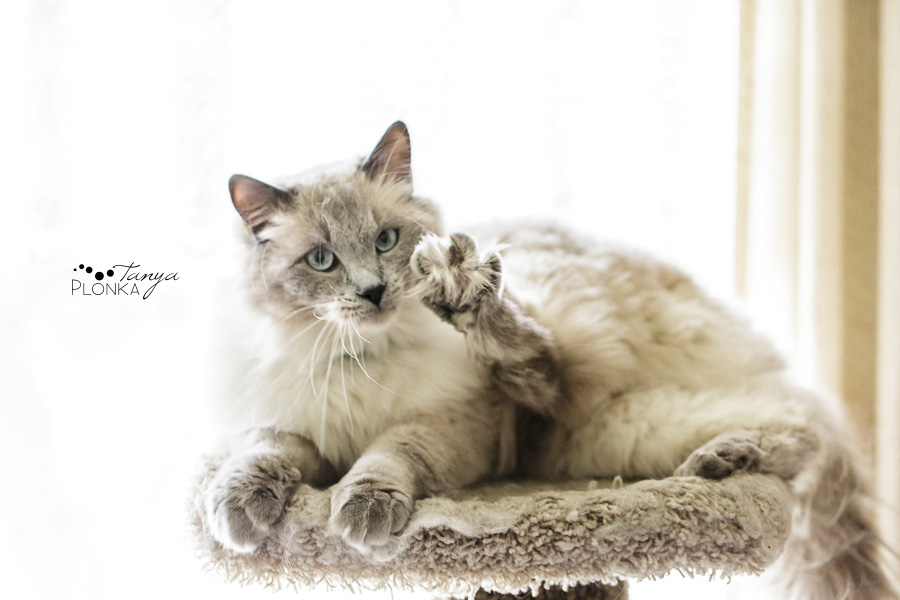 Two cats in Lethbridge, pet photography