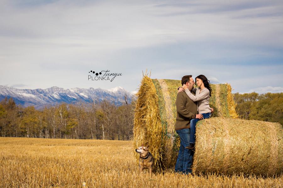 Beaver Mines couple photos on farm with dog, sitting on hay bales