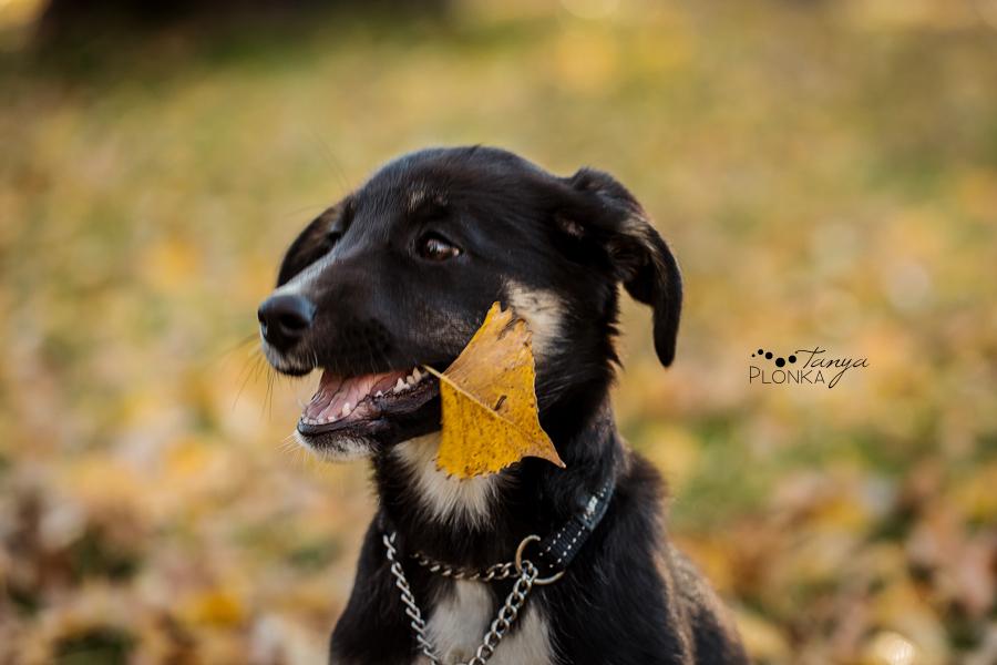 Dog available for adoption in Lethbridge, Alberta through Alberta Animal Rescue Crew Society