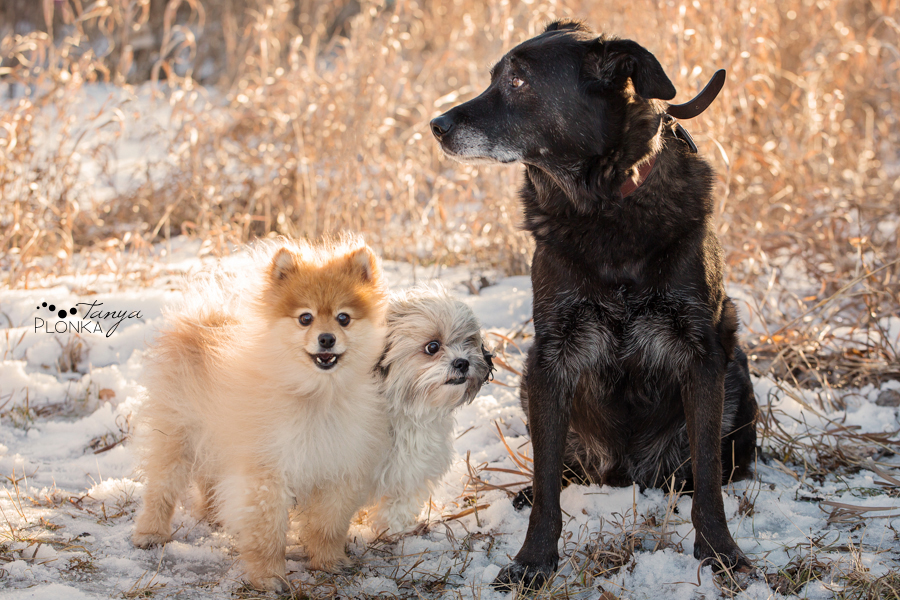 Lethbridge winter family photos