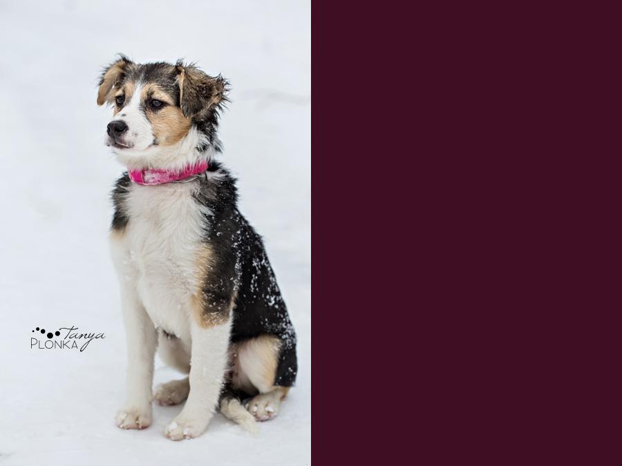 photo of adoptable pet dog in Lethbridge