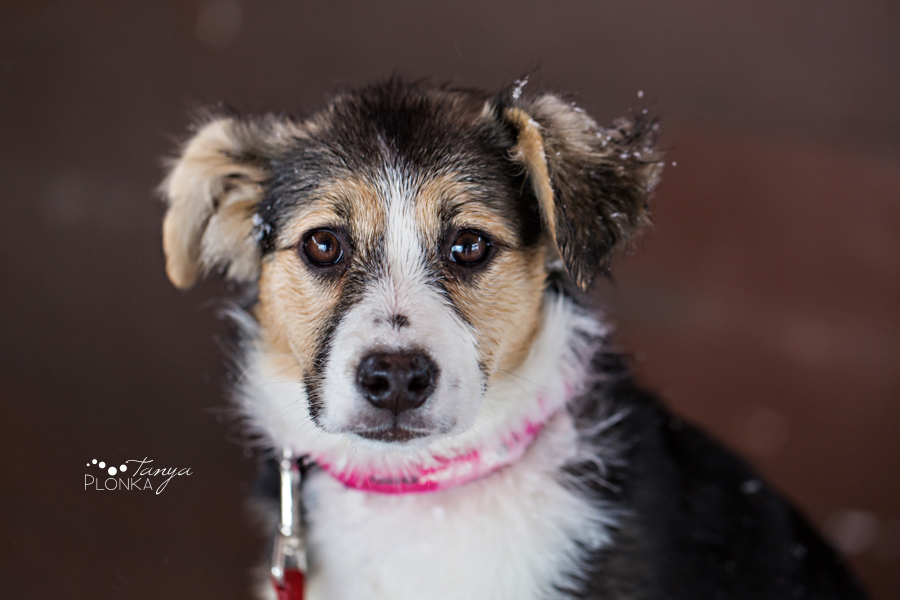 photo of adoptable pet dog in Lethbridge