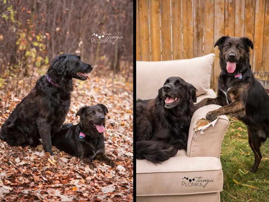Lethbridge autumn pet photos