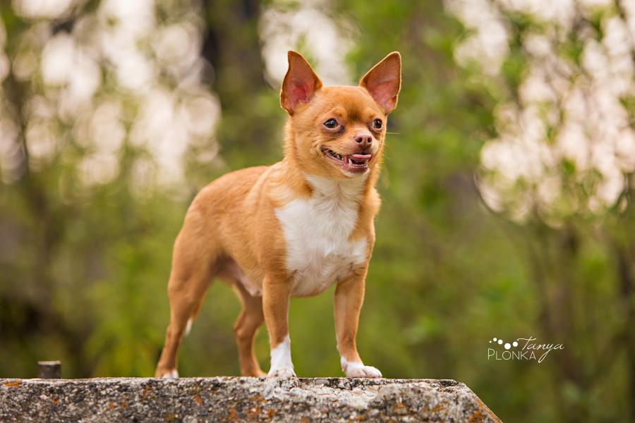 Indian Battle Park Lethbridge pet photography
