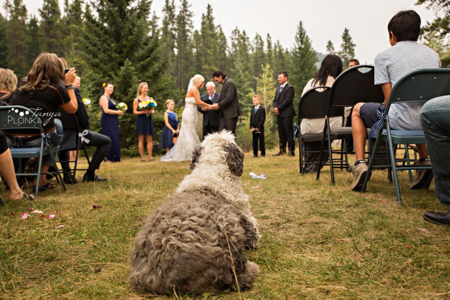 Freddie & Stef, Racehorse Creek outdoor camp wedding