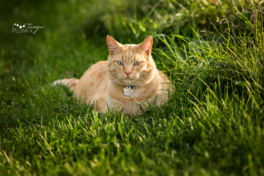 Taber country cat photo