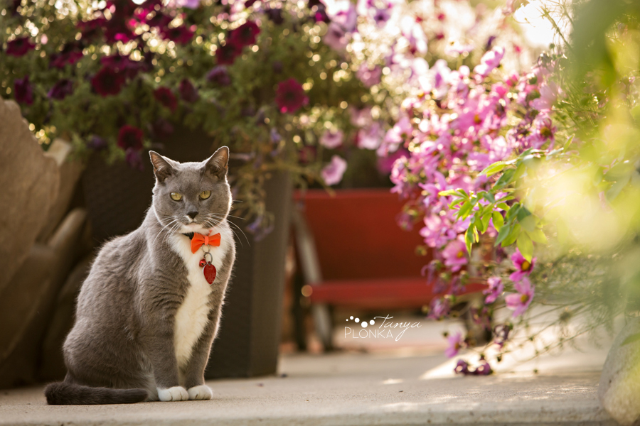 Barnwell country pet photos