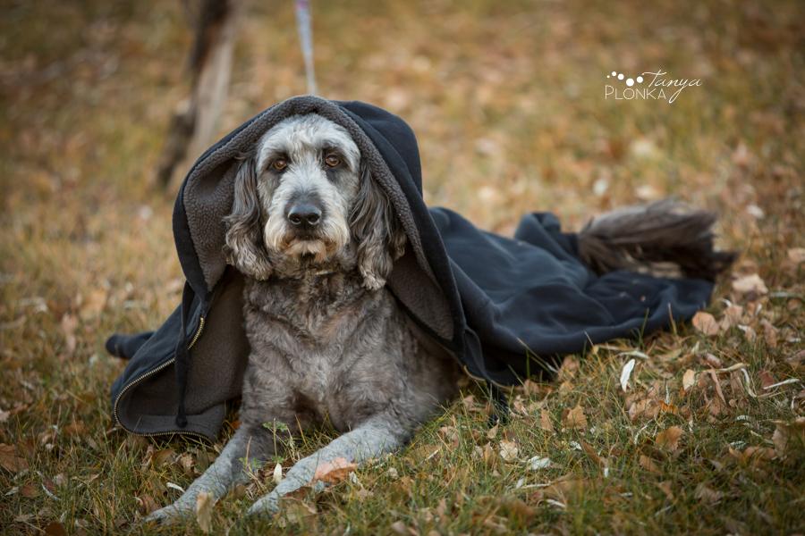 late autumn Lethbridge dog photography