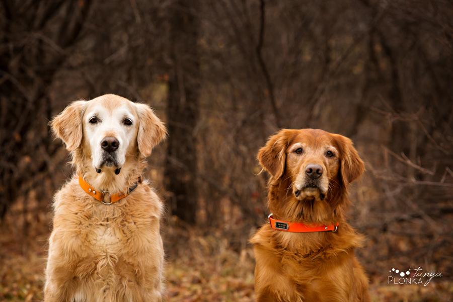 Lethbridge dog photography