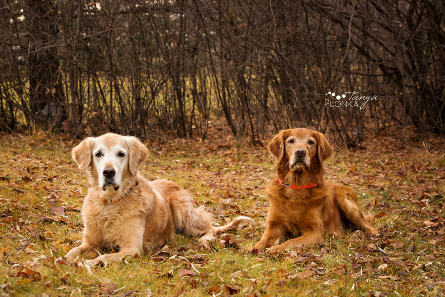 Lethbridge dog photos