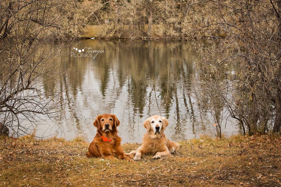 Lethbridge outdoor dog photos at lake