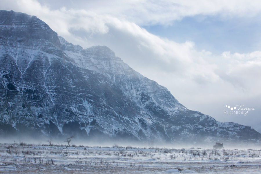 Terri & Craig, Waterton winter wedding elopement photos