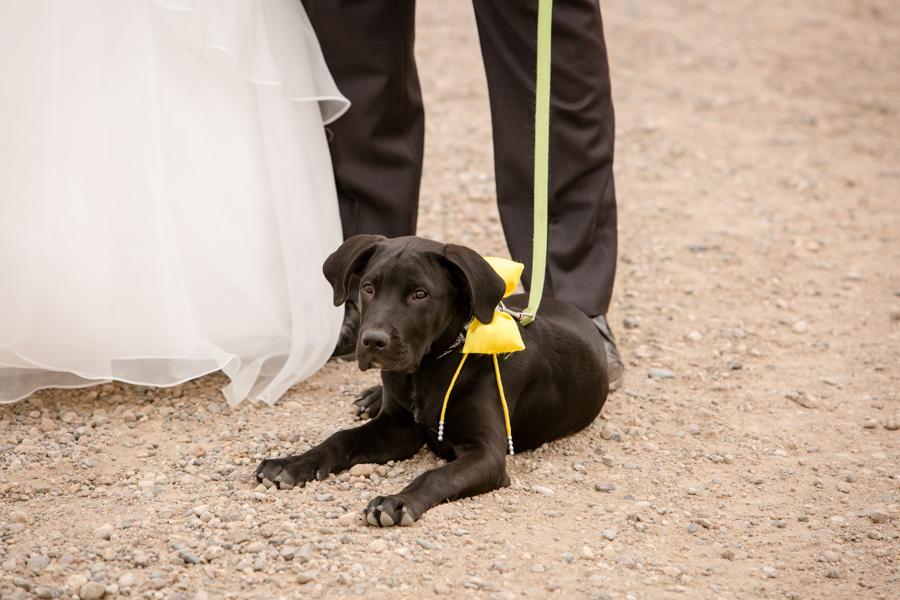 Quintina & Mike, Coaldale outdoor wedding photos