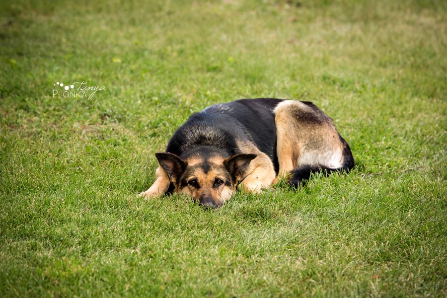 Southern Alberta farm animal photos of a dog
