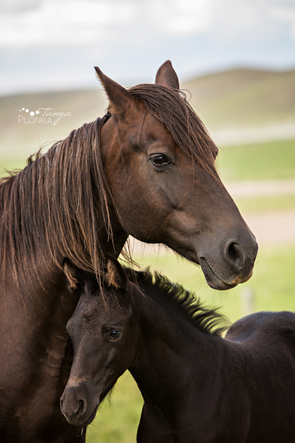 Southern Alberta equestrian photography
