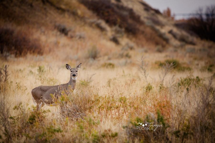 Alexander Wilderness Park nature photography