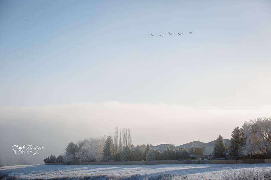 frosty Lethbridge landscape photography