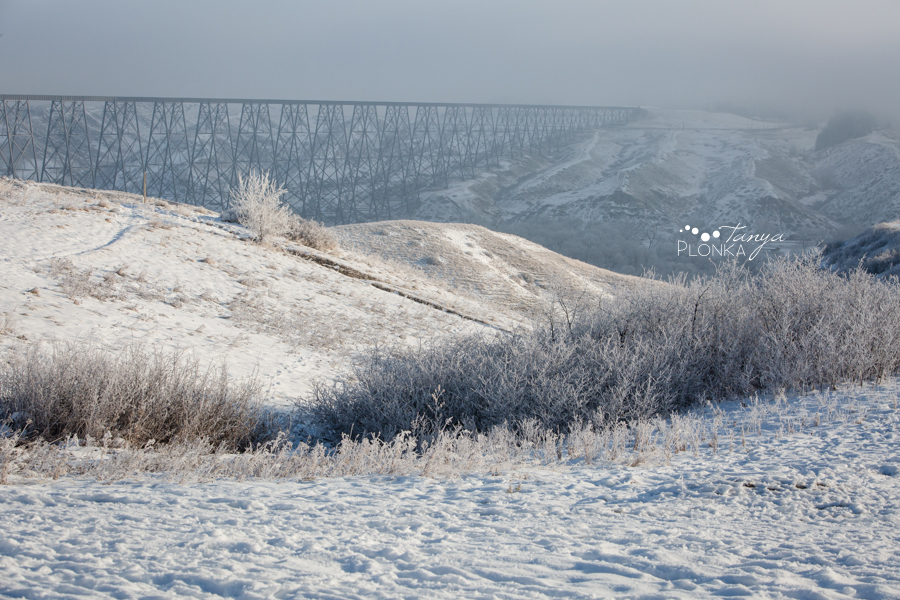 frosty Lethbridge landscape photos