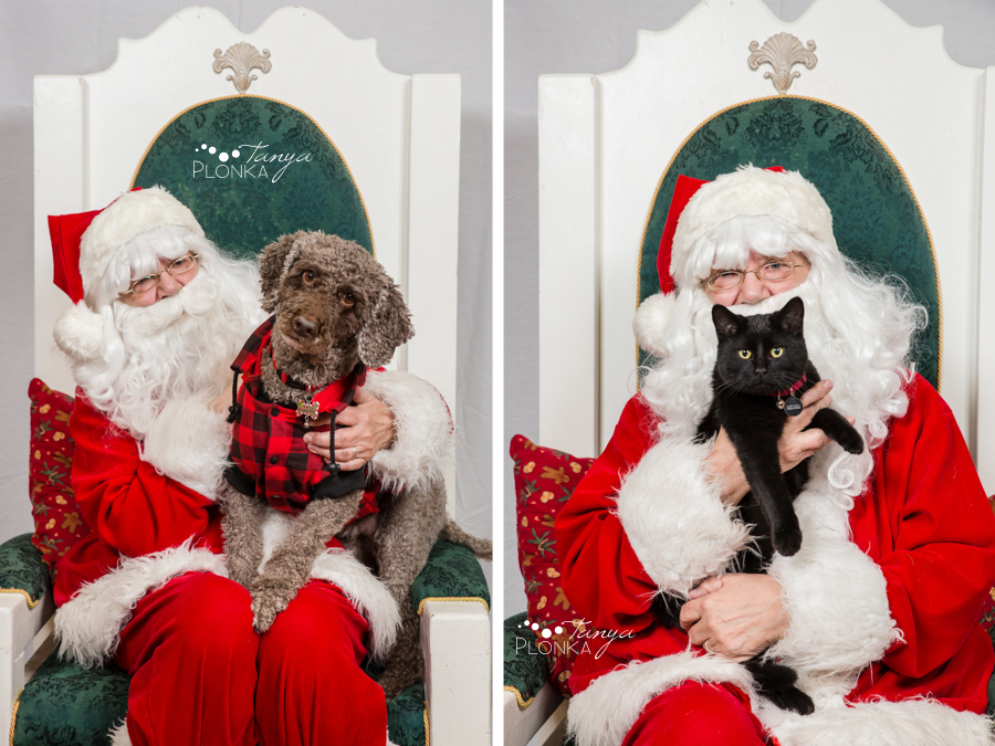 Lethbridge Santa pet photos