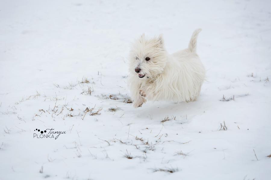 Lethbridge winter coulee pet photos
