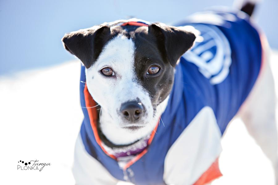 Coalhurst outdoor winter pet photography