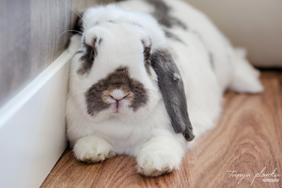 Lethbridge pet bunny photos