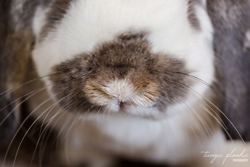 Lethbridge pet rabbit photos
