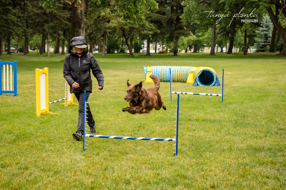 Lethbridge Windy City Canine Rescue Bark in the Park 2018