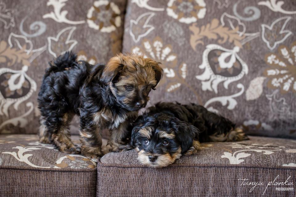 Lethbridge puppy newborn session