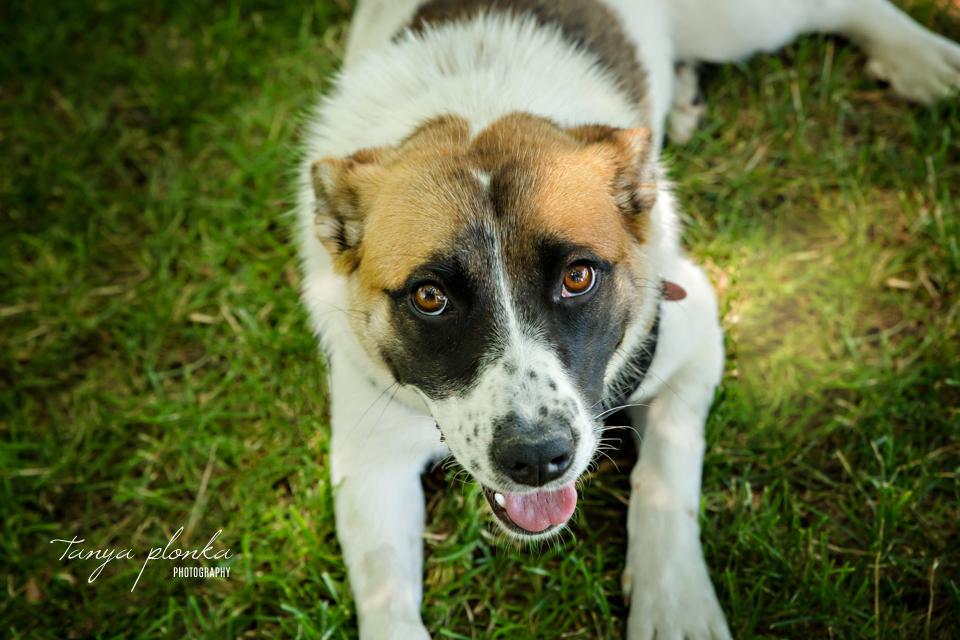 Lethbridge summertime dog photography