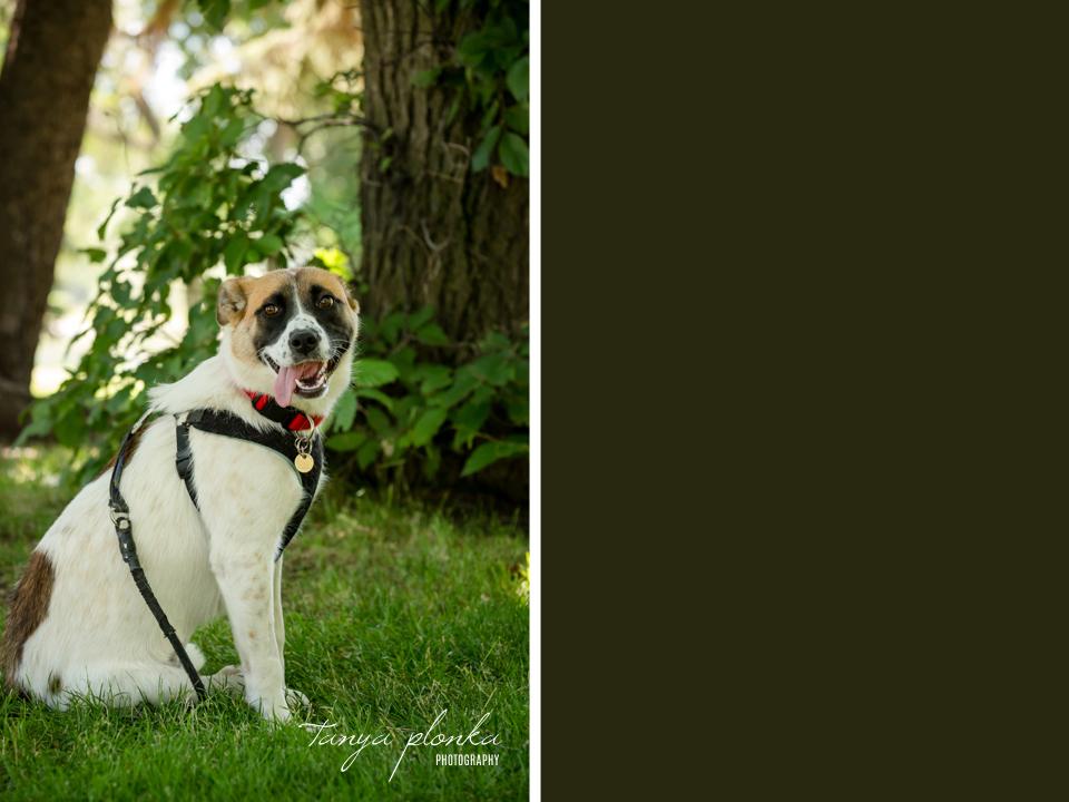 Lethbridge summertime pet photos