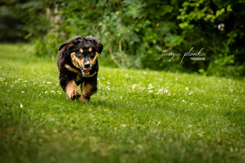Lethbridge action pet photography