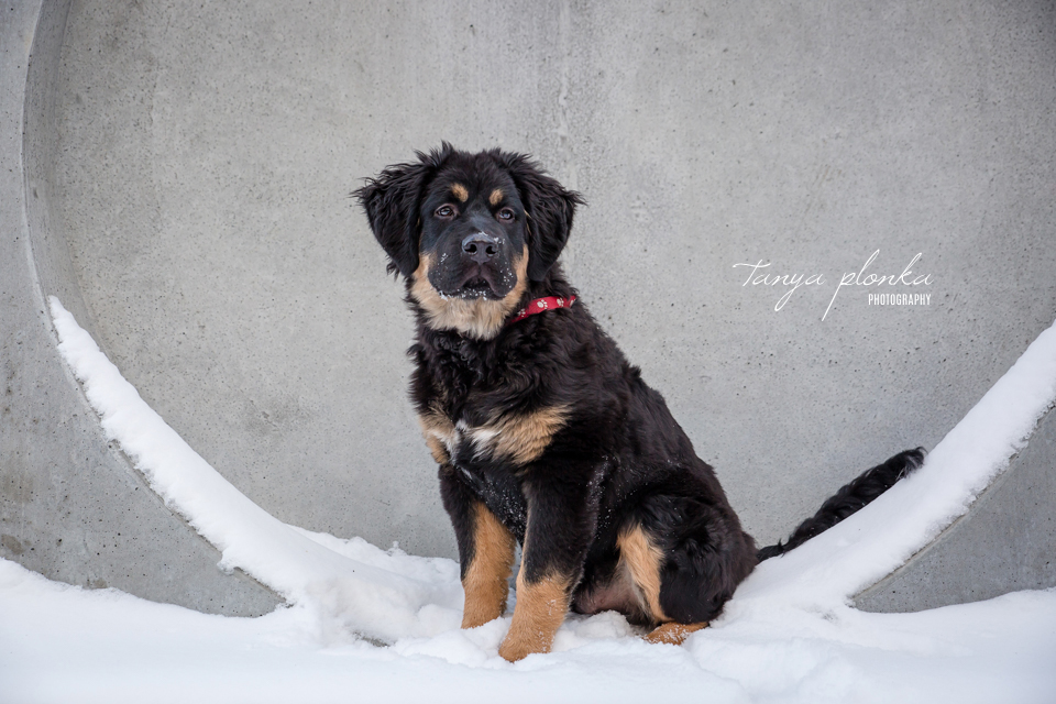 Lethbridge dog photography
