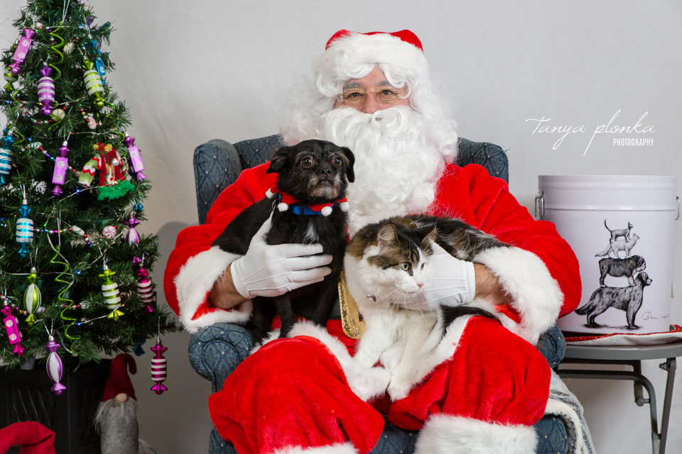 Santa Paws pet photos at Bone & Biscuit Lethbridge West