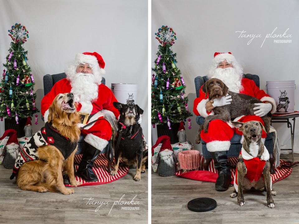 Santa Paws pet photos at Bone & Biscuit Lethbridge West
