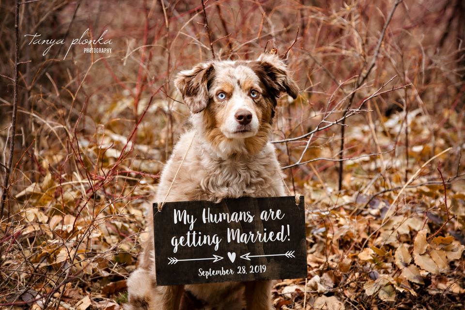 Crowsnest Pass mountain wedding announcement with dog