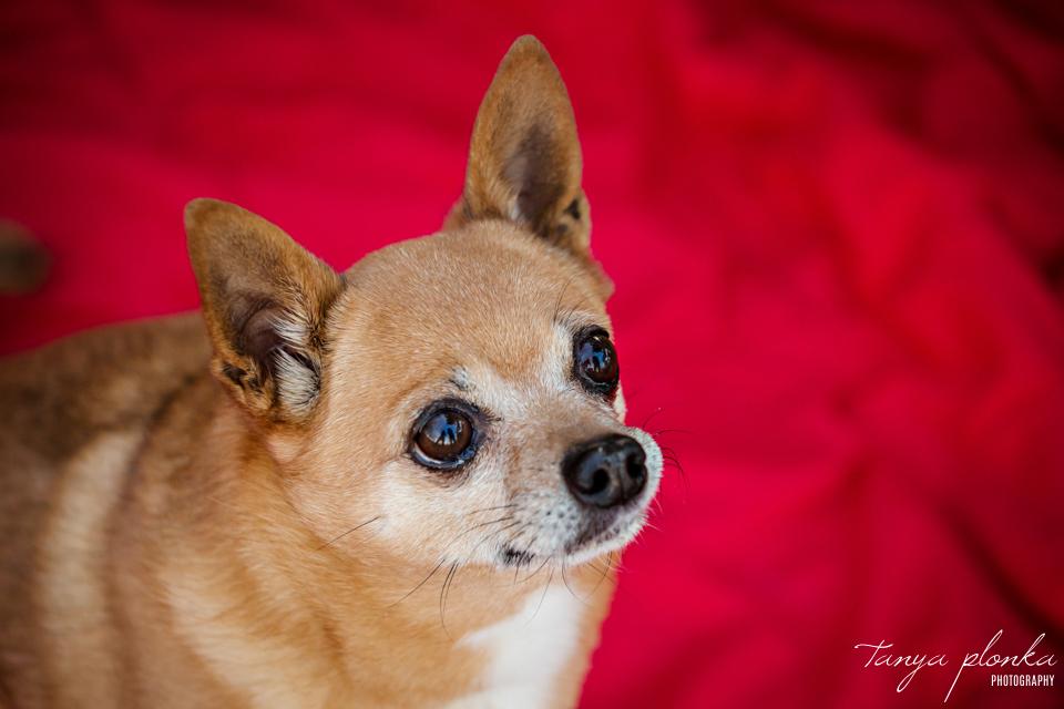 Lethbridge dog birthday photos