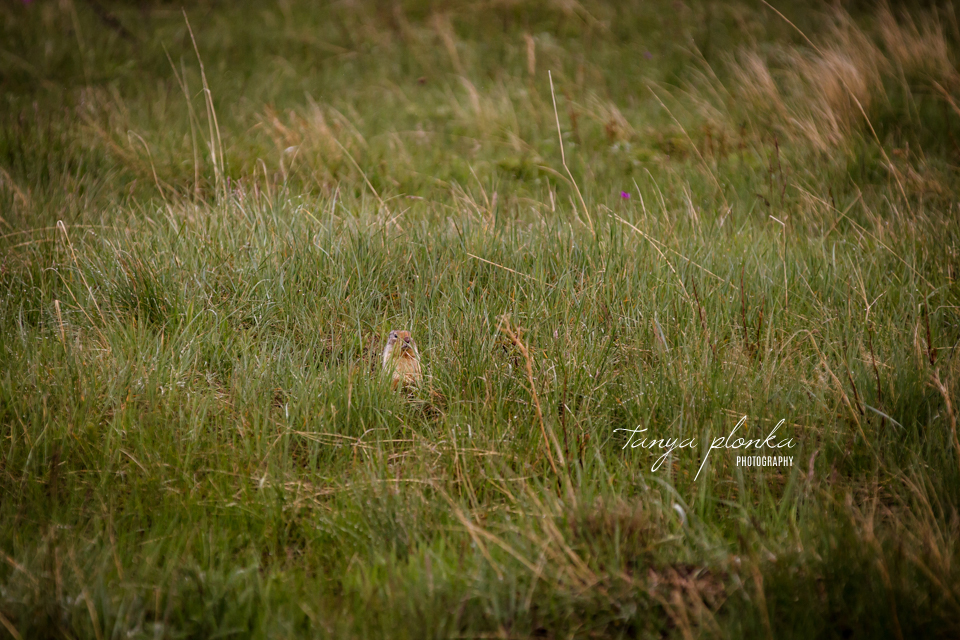 Isabelle and Andrew, Waterton wildlife photography