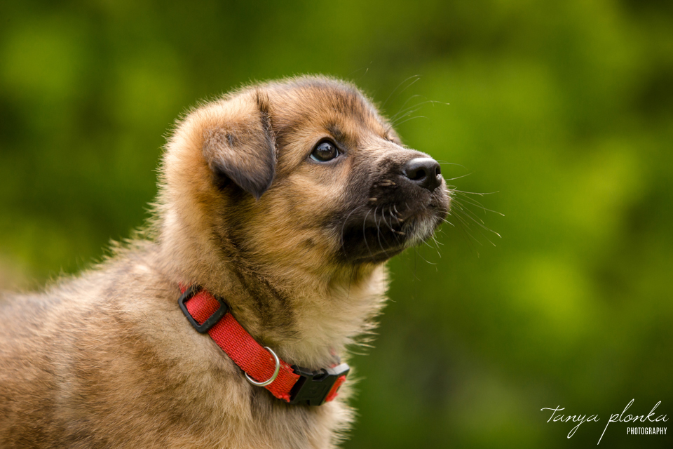 adorable outdoor puppy photos