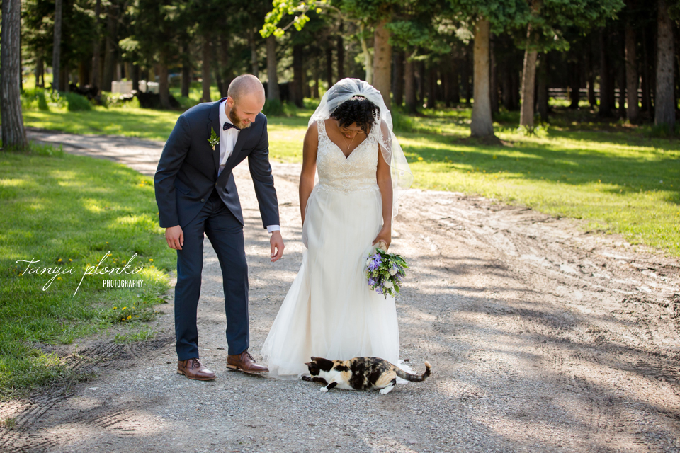 Michelle and Pieter, funny wedding photos with cat