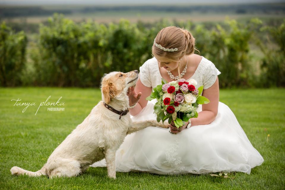 Tacey & Brendan, Fort Macleod farm wedding photography