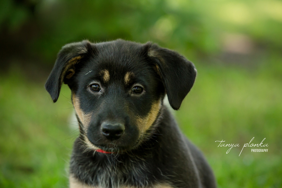 Lethbridge adoptable puppy photos