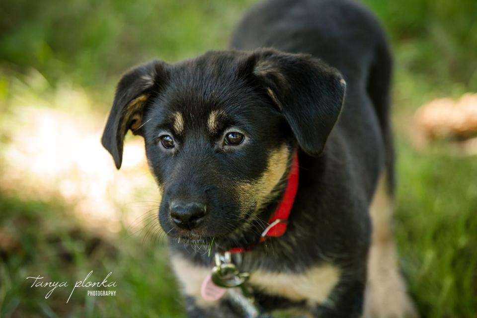 Lethbridge adoptable dog photos