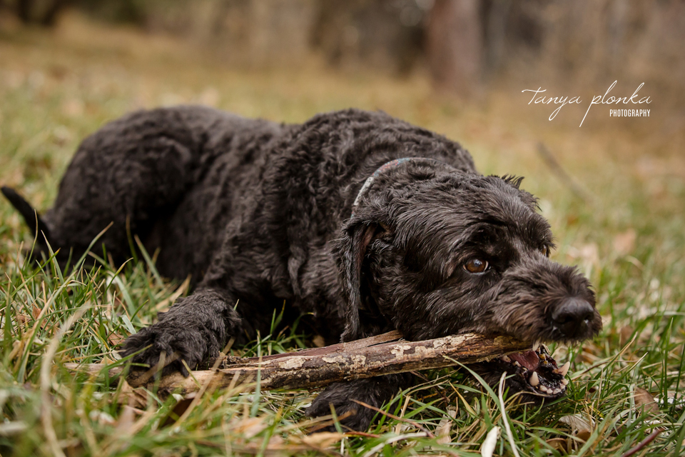 dog photography in Lethbridge