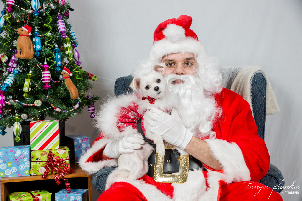 pet photos with Santa in Lethbridge