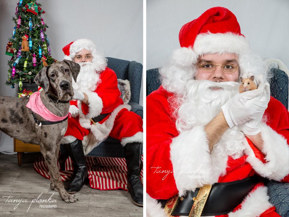 pet photos with Santa in Lethbridge