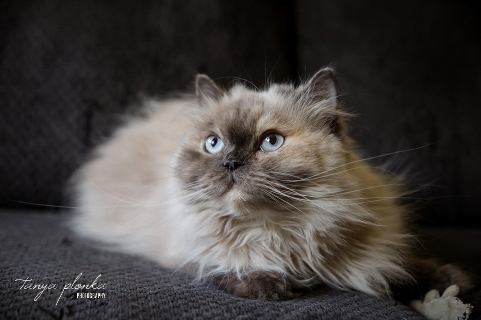 Lethbridge PAW Society 2020 cat calendar fundraiser